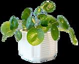 organic-fertilizer-house-plant-nurture-g