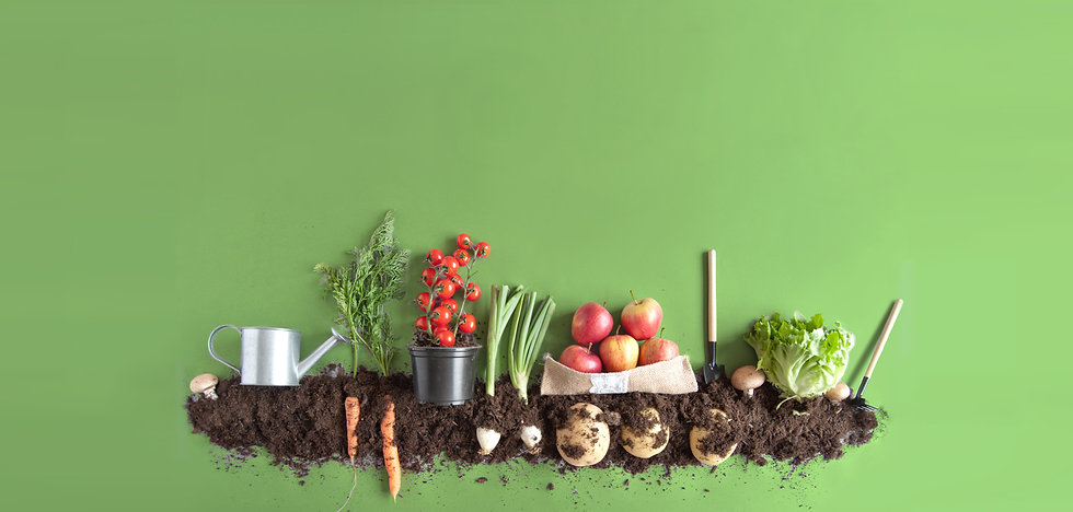 Soil-and-produce-flat-lay-green-backgrou