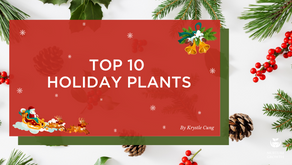 Top 10 Holiday Plants