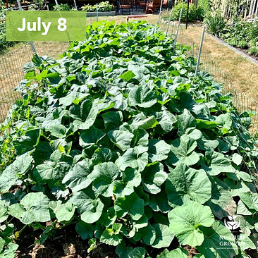 organic-fertilizer-treated-squash-nurture-growth-bio.jpeg