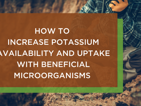 How to Increase Potassium Availability and Uptake with Beneficial Microorganisms