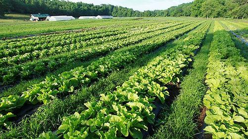 organic-fertilizer-farm-field-nurture-gr