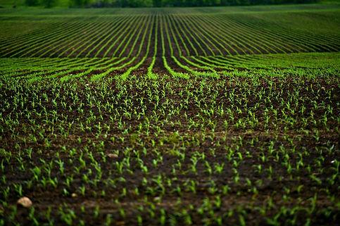 How Microbial Fertilizers Help Mitigate Environmental Stress