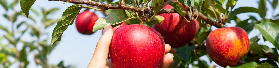 organic-fertilizer-news-and-events-banne