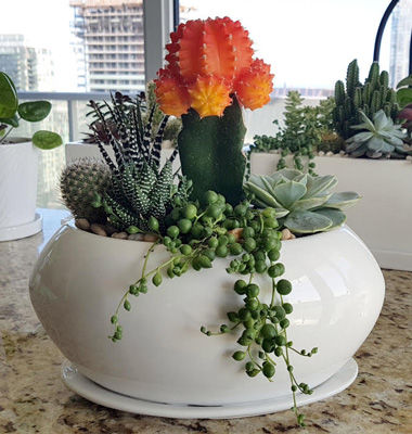 organic-fertilizer-succulents-nurture-gr