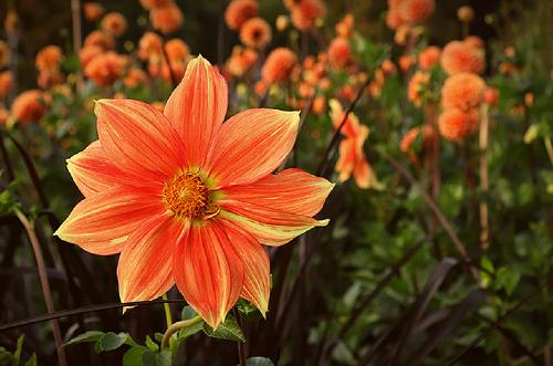 orange farbene Blume vor unscharfem Hintergrund