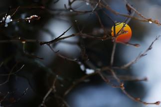 Nature (43).jpg