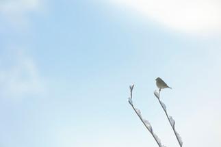Nature (62).jpg