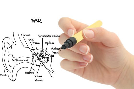The Inner Ear: Anatomy of the Vestibular System