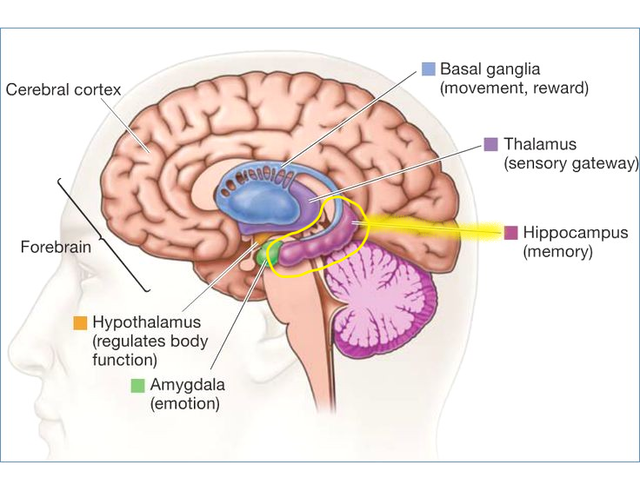 Exercise & Memory Function