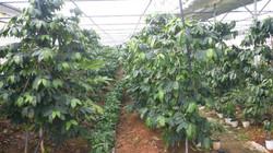 커피 농장