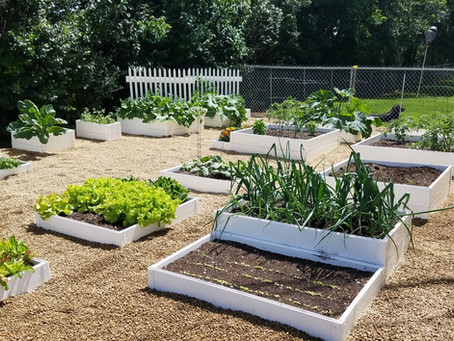 The Many Benefits of Raised Garden Beds