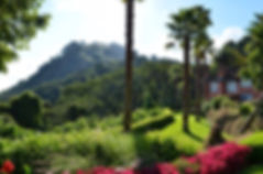 Sunbird Hotel gardens - Zomba Plateau