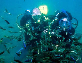 Scuba diving and tropical fish in Lake Malawi