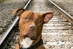 Railroad-Tyson