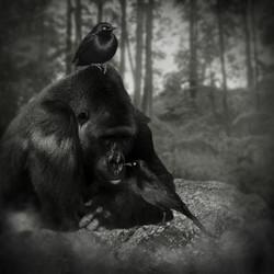 Ape and Birds