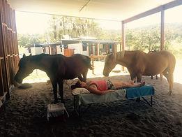 horses healing humans healing horses