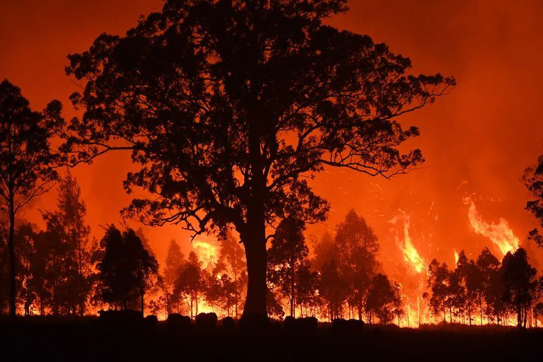 A forest fire foregrounded by a large tree in silhoette