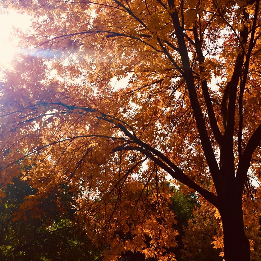 Missouri Botanical Gardens, St. Louis, Missouri