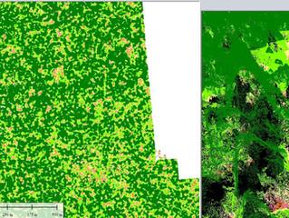 Forestry Inventory / Analisa Hutan dengan UAV