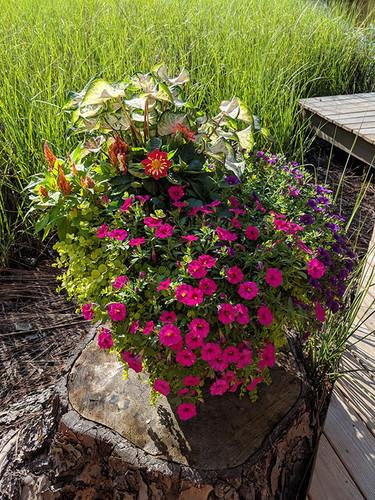 Flowers on dock.jpg