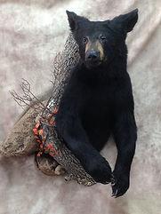 Black Bear 1_2 Mount