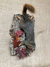 Fox Squirrel.jpg