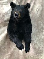 Black Bear 1_2 Mount