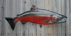 salmon-coho-fish-mount-30-2.jpg