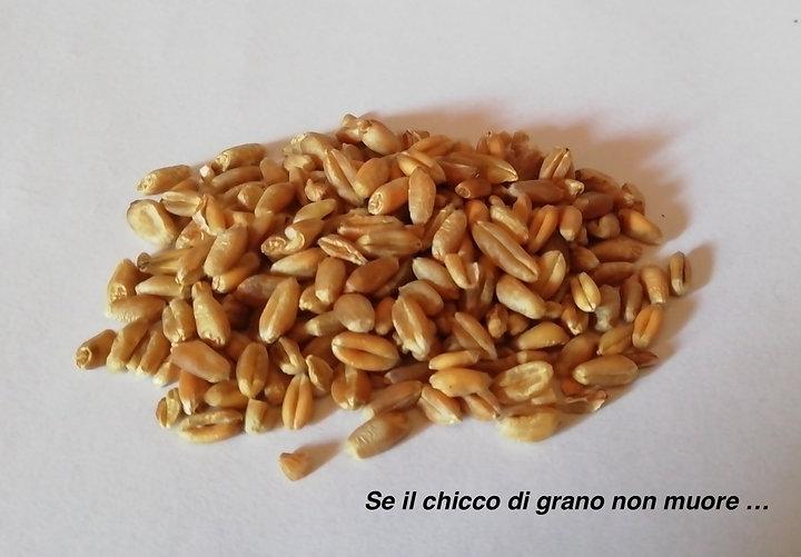 Grano_02.jpg
