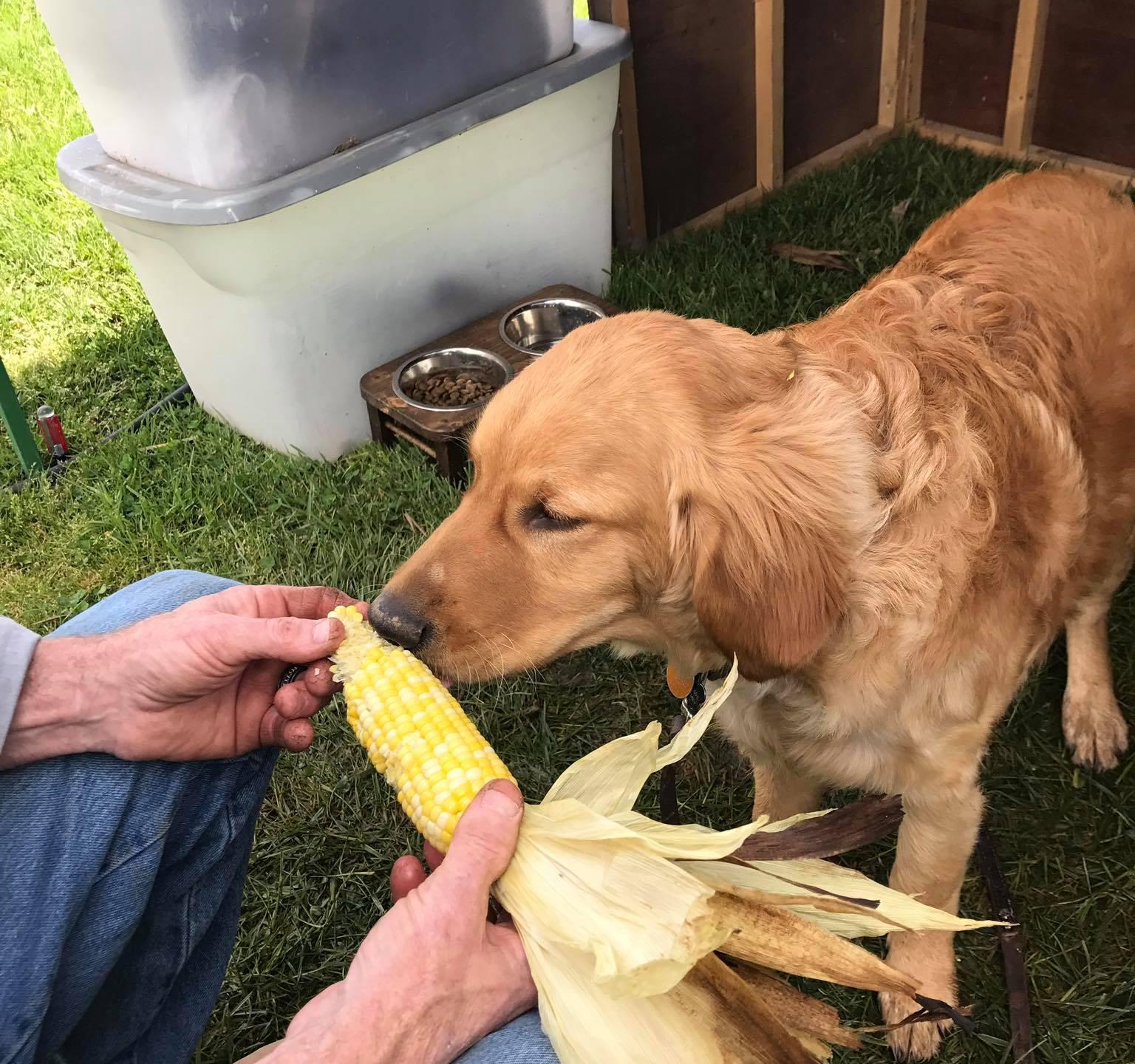 Pup enjoying a healthy snack
