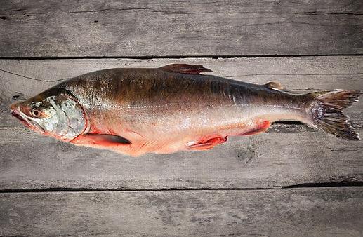 Pink-Salmon-1-650x425.jpg