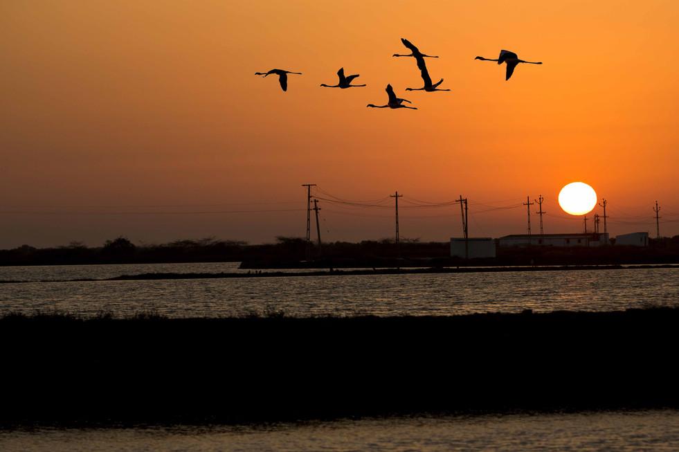 6 Flying Birds
