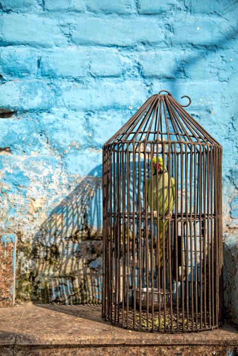 Not a Free Bird