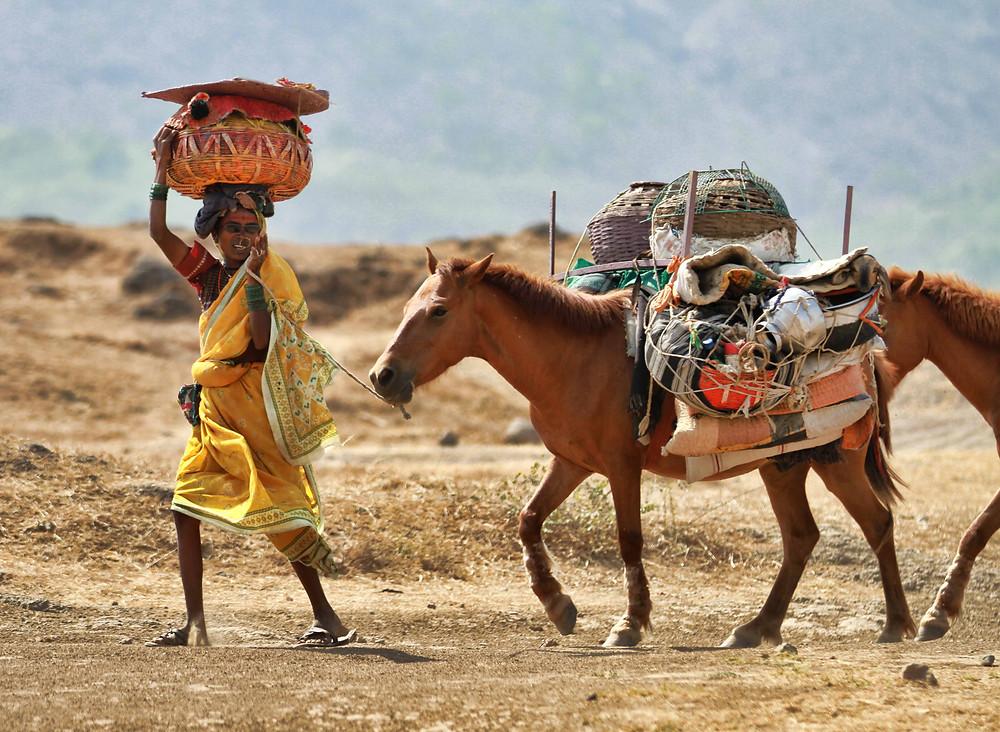 Migration of Hatkar dhangars