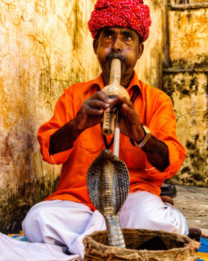 Snake charmers india