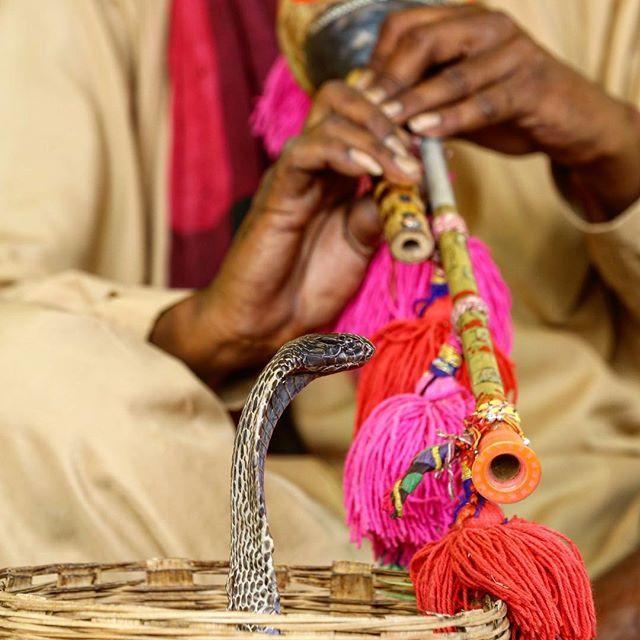 Snake charmers been