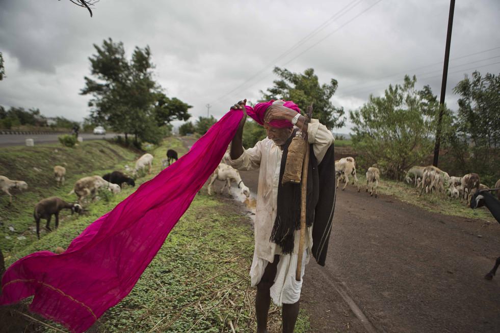 Hatkar dhangar traditional turban