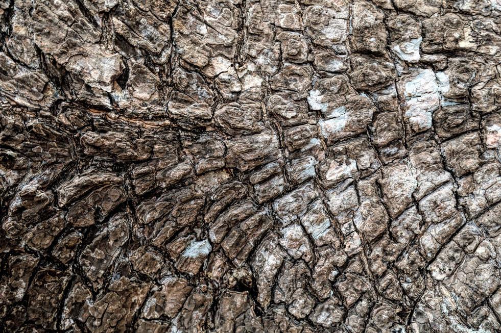 Unbroken view of the bark