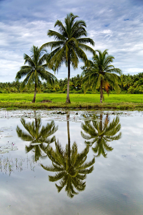 Reflections & Symmetry