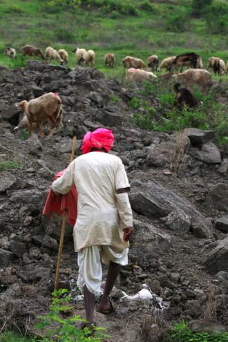 Sheep herders hatkar dhangars