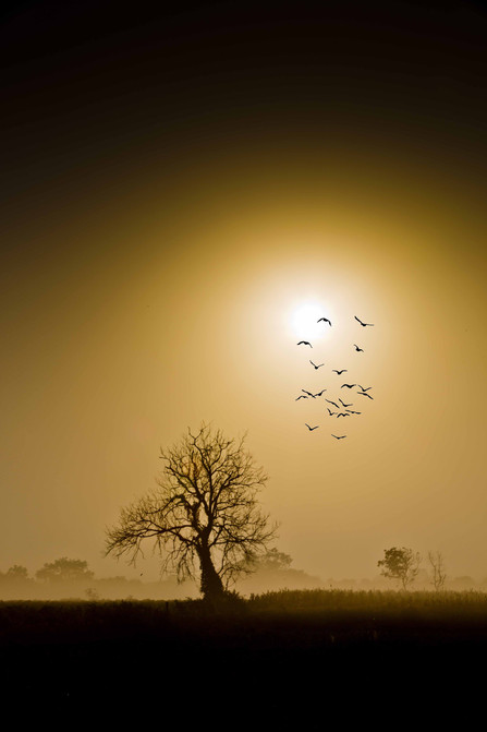 Sun Spotlight