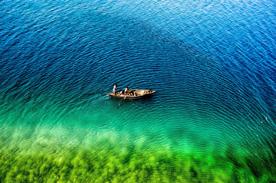 Coral fields of havelock -Andaman Islands