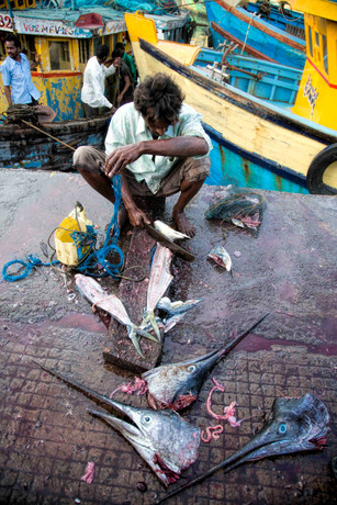 Fish & Slice  - Vizag