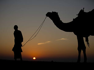 Desert Life India