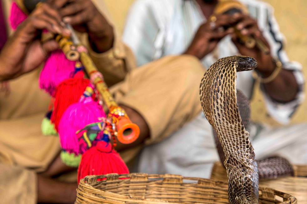 Snake charmers close up