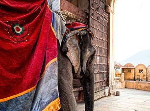 Elephants of Amber fort