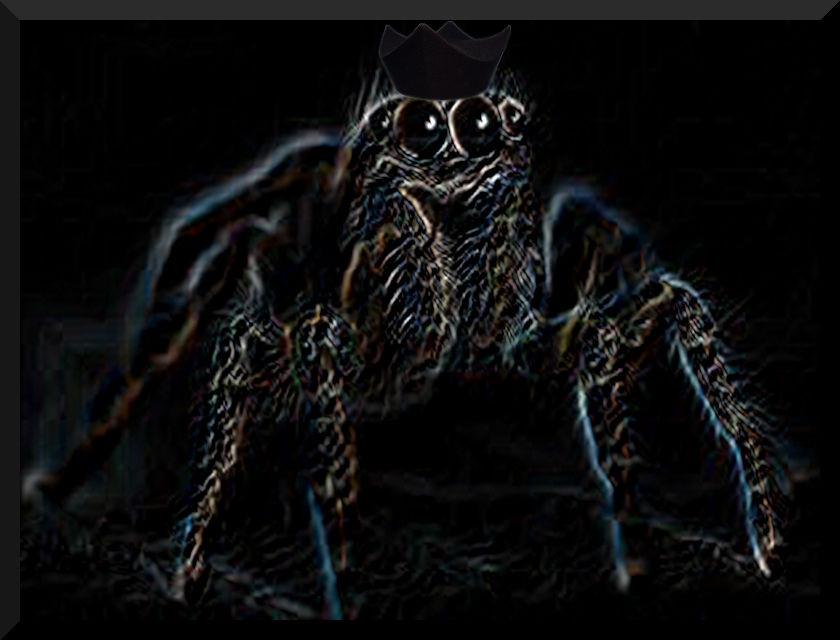 Araña con bonete.