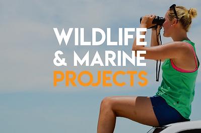 Wildlife & Marine volunteer projects