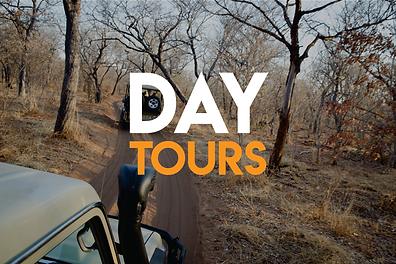 Day tours in South Africa